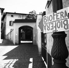 Biofera 2019