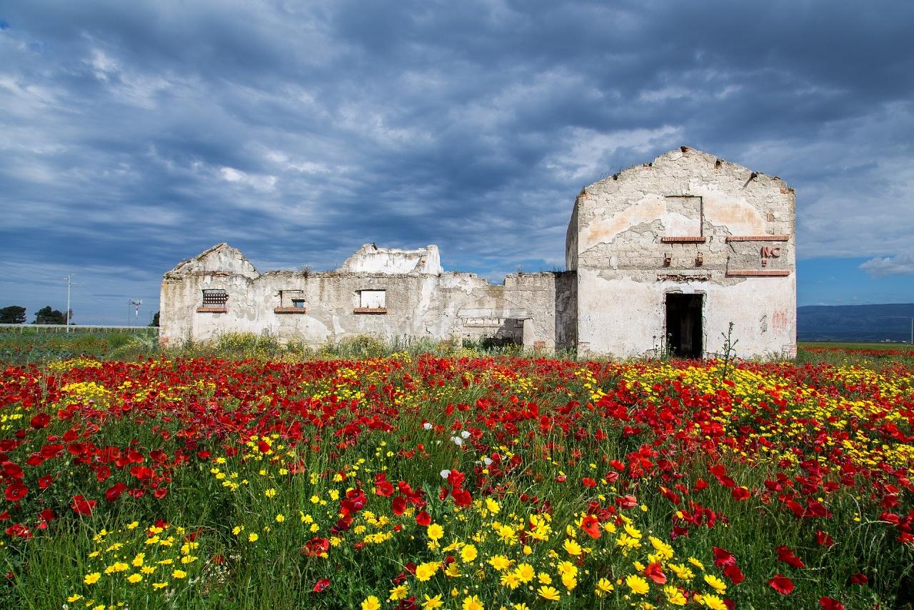 """""""Spring"""" - Puglia - 2019"""